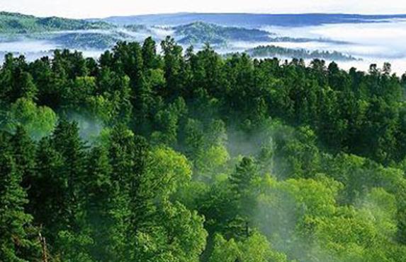上海将全面建立林长制,预计2025年森林覆盖率达到19.5%
